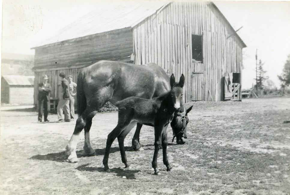 Horse, Donkey & Barn